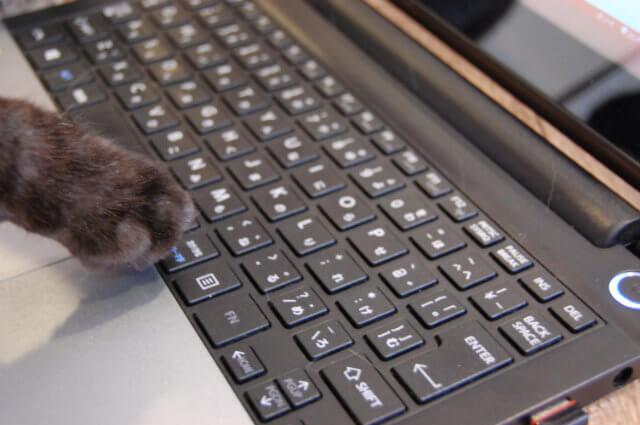 猫とキーボード
